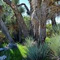 Arthur B Ripley Desert Woodland State Park by Kyle Hanson