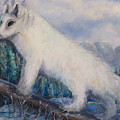 Artic Fox by Bernadette Krupa