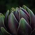 Artichoke Art On Black by Patricia Strand