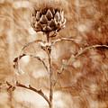 Artichoke Bloom by La Rae  Roberts
