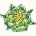 Artichoke Star by Judith Kunzle