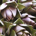 Artichokes by Erla Zwingle