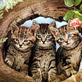 Three Cats by Engy Khalil
