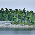 Artistic Granite And Trees  by Phill Doherty