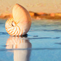 Artistic Nautilus by Barbara Rabek