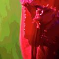 Artistic Red Tulip by Judi Quelland
