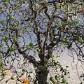 Artistic Tree by Margie Avellino