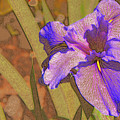 Artsy Iris by Rosalie Scanlon