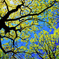 Artsy Tree Canopy Series, Early Spring - # 01 by The American Shutterbug Society
