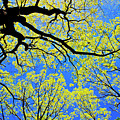 Artsy Tree Canopy Series, Early Spring - # 03 by The American Shutterbug Society