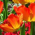 Artsy Tulips by Karen Molenaar Terrell