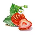 Artz Vitamins A Strawberry Heart by Irina Sztukowski