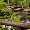 As The Creek Flows by Greg Nyquist