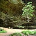 Ash Cave Tree by Rhoda Gerig