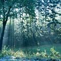 Ashenvale Forest by Daniel Csoka