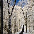 Asheville Nc - Winter Stroll by Susan Stanton