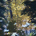 Ashland Reflections by John Loyd Rushing