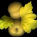 Asian Brown Pears by Marsha Tudor