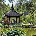 Asian Charm  by Chuck Kuhn