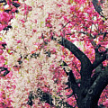 Asian Cherry Vignette by Jessica Jenney