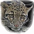 Asian Cloud Leopard by Larry Linton