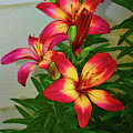 Asian Lilly Spring Time by Tom Janca