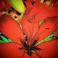 Asian Lily by Vijay Sharon Govender