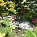 Asian Rock Garden by Sonja Anderson