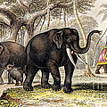 Asiatic Elephant With Young, 19th by Wellcome Images