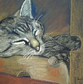 Asleep....in A Box by Sandra McClure