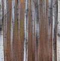 Aspen Abstract Vertical by Patti Deters