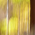 Aspen Blur #1 by Vincent Bonafede