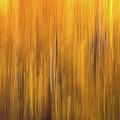 Aspen Blur #5 by Vincent Bonafede
