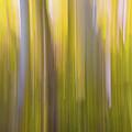 Aspen Blur #6 by Vincent Bonafede