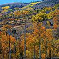 Aspen Cascades In The Sierra by Lynn Bauer