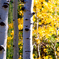 Aspen Color by James BO Insogna