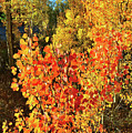 Aspen Colors In Dillon Colorado by Ray Mathis