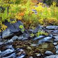 Aspen Creek by Anthony Michael Bonafede