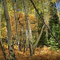 Aspen Ecosystem by Pete Hellmann