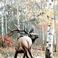 Aspen Elk by JoAnne Corpany