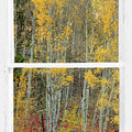 Aspen Forest Red Wilderness Floor Rustic Window View by James BO Insogna