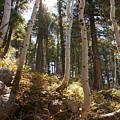 Aspen Glen by Heather Coen