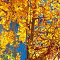 Aspen Glow Autumn Sky by Anastasia Savage Ealy