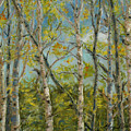 Aspen Glow by Mary Benke