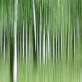 Aspen Grass Dance by Deborah Hughes