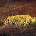 Aspen Grove by Rich Franco