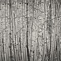 Aspen Illusion by Amanda Smith
