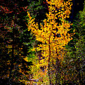 Aspen In Hope Valley by Jim Young
