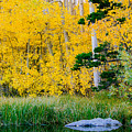 Aspen Pond by Justin Lowery
