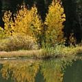 Aspen Pond Riv M 32 by Sierra Dall